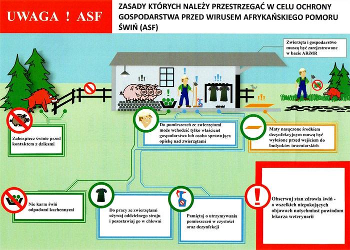 Ilustracja do informacji: Afrykański pomór świń