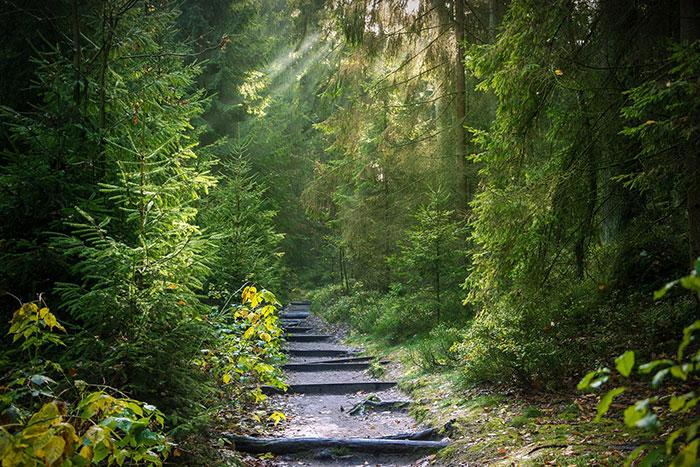 Ilustracja do informacji: Zapraszamy do lasu